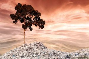 Thriving in Babylon - Wisdom
